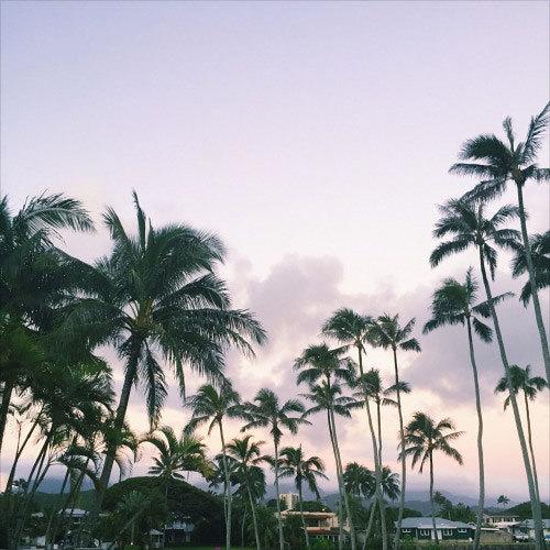 che-tropics